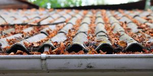 Houston Homeowners Leaves on Your Roof Can Cause Damage & Roof Repair Houston | Amstill Roofing memphite.com
