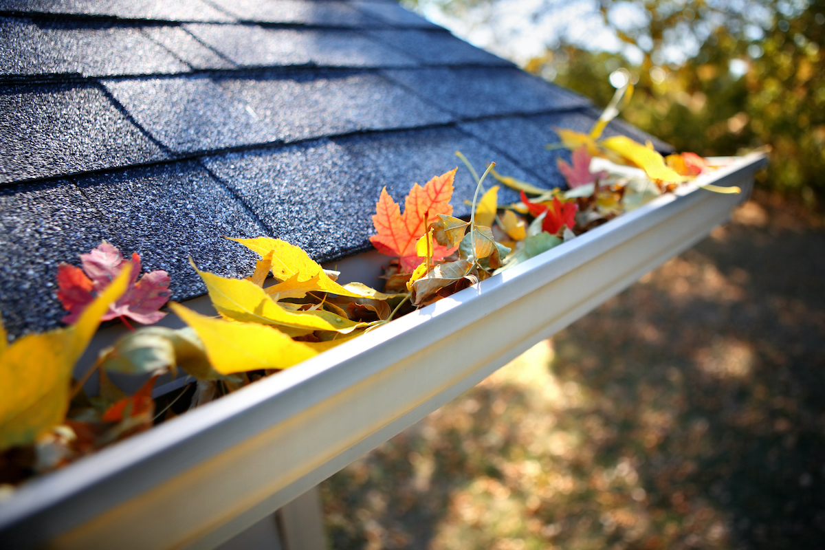 Katy seasonal roof inspection during fall with autumn leaves in gutters